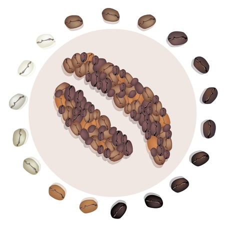 processed grains: Various Kind of Roasted Coffee Bean Around The Civet Coffee Beans, The Most Expensive Coffee in The World Illustration