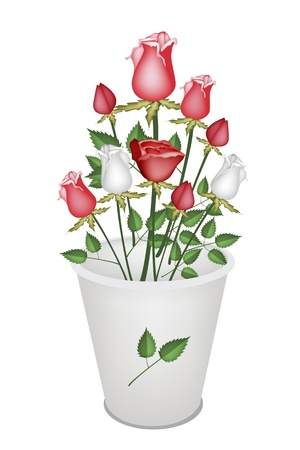 A Symbol of Love, Bright and Beautiful Bouquet of White and Red Roses in Bucket Isolated on White Background