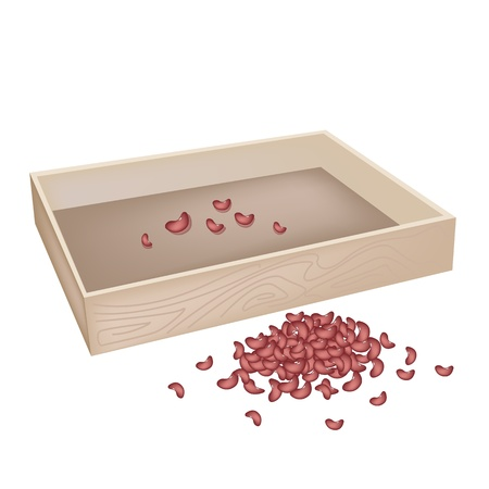 An Illustration Heap Of Kidney Dried Beans with Wooden Box Isolated on White Background Vector