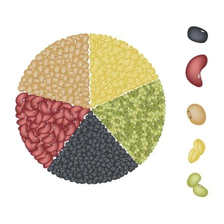 다른 말린 콩의 일러스트 집은, 녹두, 강낭콩, 검은 눈 콩, 간장 콩과 노란색 분할 완두콩 원형 차트를 형성