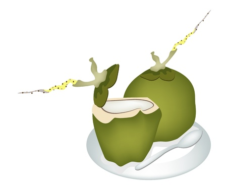 coconut drink: Ecological Concept, An Illustration of Beautiful Fresh Coconuts and Coconut Water Drink with Spoon on White Dish