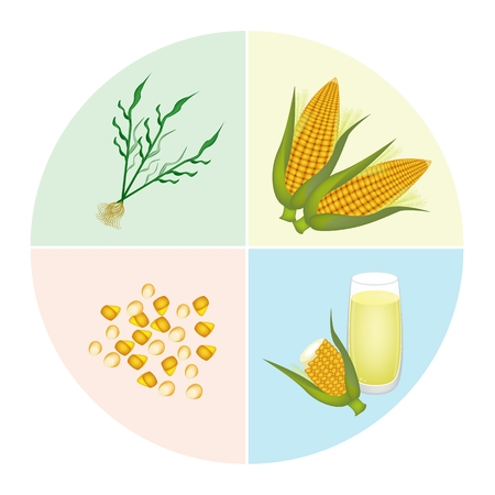 processed grains: The Processing of Corn Production from Corn Seed into Corn Stalk, Fresh Corn and Corn Juice