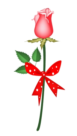 Beautiful Red Rose with Red Ribbon and Bow, Flower Is A Perfect Romantic Gift or Present for Someone Special  Vector