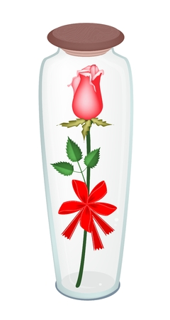 Beautiful Red Rose with Red Ribbon and Bow in A Tall Glass Jar, Flower Is A Perfect Romantic Gift or Present for Someone Special  Vector