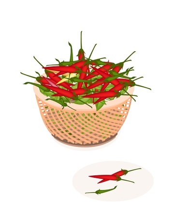 Fresh Fruits, Fresh Red Hot Chili Pepper and Green Hot Chili Pepper on A Beautiful Wicker Basket Vector
