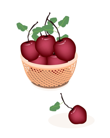 Fresh Fruits, Delicious Fresh Red Apple With Green Leaves on A Beautiful Wicker Basket Vector