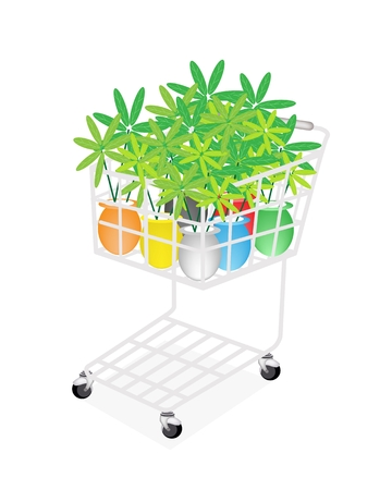 beautifu: A Shopping Cart Full with Various Colors of Beautifu Green Tree in Flower Pot Isolated on White Background