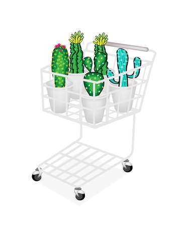thorn bush: A Shopping Cart Full with Various Type of Cactus and Cactus Flowers for Garden Decoration, Isolated on White Background Illustration