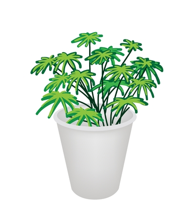 hedge trees: An Illustration of Beautiful Green Plant in Flowerpot for Garden Decoration Illustration