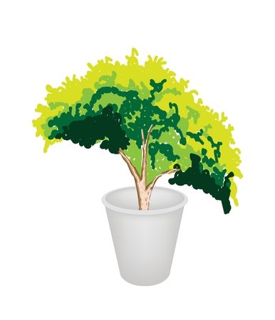 An Illustration of Beautiful Green Plant in A Flowerpot for Garden Decoration Vector