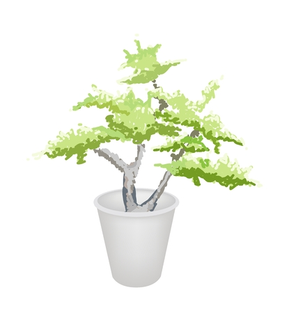 An Illustration of Beautiful Bonsai Tree in A Flowerpot for Garden Decoration Vector