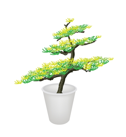 hedge trees: An Illustration of Beautiful Bonsai Tree in A Flowerpot for Garden Decoration Illustration