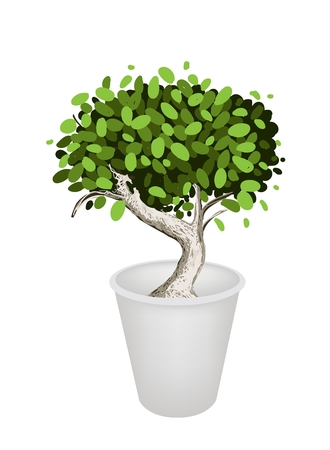 bonsai tree: An Illustration of Beautiful Bonsai Tree or Small Plant in A Flowerpot for Garden Decoration