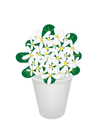 Beautiful Flower, An Illustration of Lovely White Common Gardenias or Cape Jasmine Flowers on Green Leaves in Flowerpot for Garden Decoration  Vector