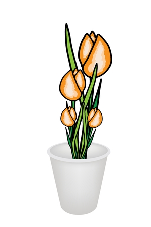 Beautiful Flower, An Illustration Collection of Lovely Spring Colorful Tulips in Flowerpot for Garden Decoration, Isolated on A White Background  Vector