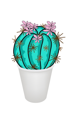 thorn bush: Illustration of Beautiful Cactus Plant and Pink Flowers in Flowerpot for Garden Decoration, Isolated on White Background