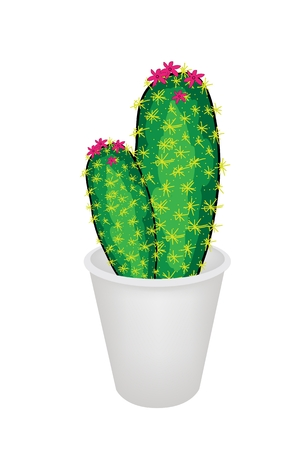 prickly pear: An Illustration of Two Cactus Plant and Flower in Flowerpot for Garden Decoration, Isolated on White Background Illustration