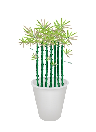 hedge trees: An Illustration of Landscaping Tree Symbol or Isometric Tree of Bamboo Tree in Flowerpot for Garden Decoration