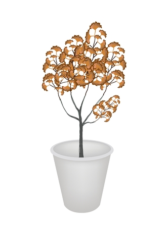 An Illustration of Abstract Landscaping Tree Symbol or Isometric Brown Tree in A Flowerpot Isolated on White Background, for Garden Decoration
