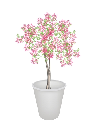 houseplant: An Illustration Landscaping Tree Symbol or Isometric Tree and Plant of Beautiful Pink Flower on Tree in A Flowerpot Isolated on White Background, for Garden Decoration