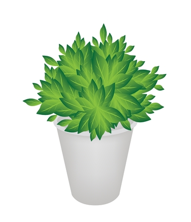 An Illustration of Landscaping Tree Symbols or Isometric Tree in A Flowerpot for Garden Decoration