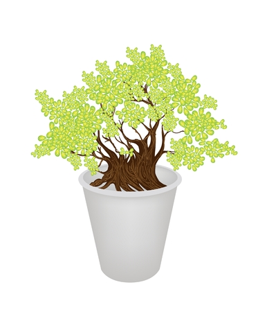 sycamore leaf: An Illustration of Exotic Bonsai Tree in A Flowerpot for Garden Decoration Illustration