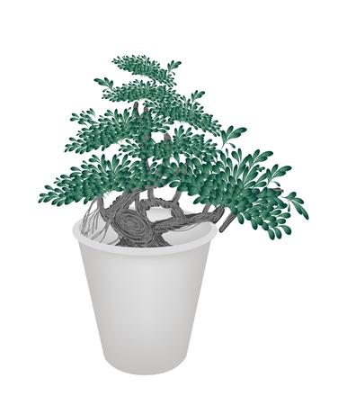peepal tree: An Illustration of Beautiful Banyan Bonsai Tree in A Flowerpot for Garden Decoration