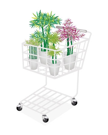 A Shopping Cart Full with Bamboo Trees in A Flowerpot for Garden Decoration  photo