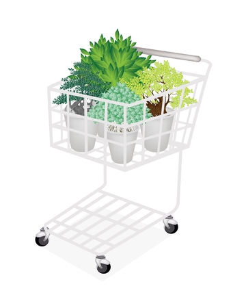 peepal tree: A Shopping Cart Full with Beautiful Bonsai Trees in A Flowerpot for Garden Decoration