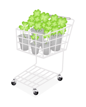 A Symbol of Love, A Shopping Cart Full with Fresh Four Leaf Clover Plants or Shamrock in Flowerpot for St. Patricks Day Celebration and Garden Decoration.  Vector