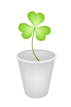 Symbols for Fortune and Luck, Illustration of Fresh Four Leaf Clover Plant or Shamrock in Flowerpot for St. Patricks Day Celebration and Garden Decoration.  Vector
