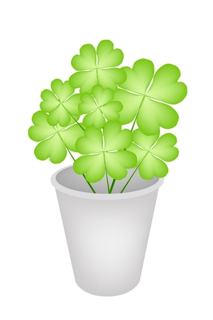 cloverleafes: Symbols for Fortune and Luck, Illustration of Fresh Four Leaf Clover Plants or Shamrock in Flowerpot for St. Patricks Day Celebration and Garden Decoration.
