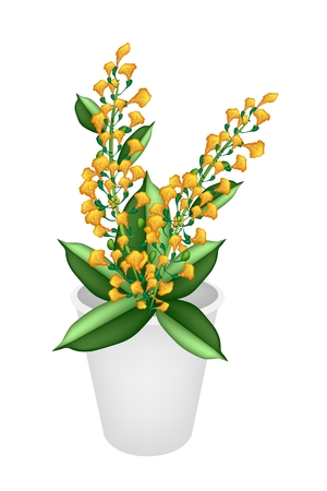 fistula: Beautiful Flower, An Illustration Yellow Color of Padauk Flower or Papilionoideae Flower in Flowerpot for Garden Decoration.