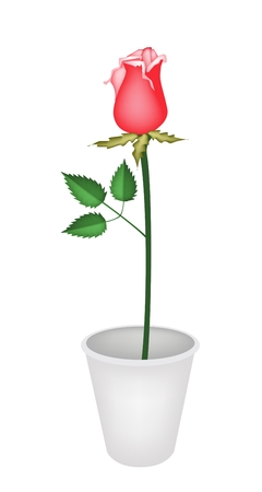 A Symbol of Love, Illustration of A Lovely Red Rose in Flowerpot for Garden Decoration Isolated on White Background.  Vector