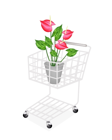Beautiful Flower, A Shopping Cart Full with Heart Shaped Spathe of Blooming Red Anthurium Flowers  Vector