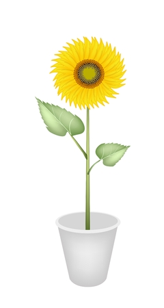 An Illustration Bright and Beautiful Yellow Colors of Sunflowers Vector