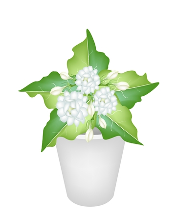 Beautiful Flower, An Illustration Group of Fresh White Jasmine Flowers  Vector