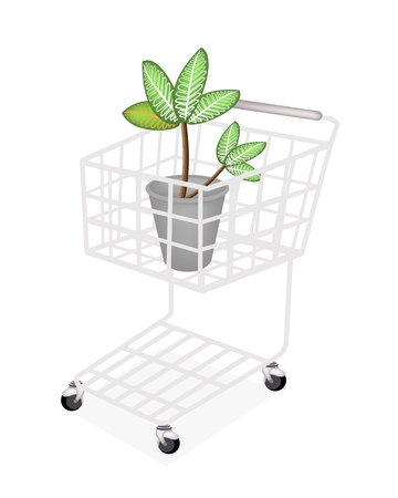 Ecological Concept, A Shopping Cart Full with Dieffenbachia Picta Marianne Plant