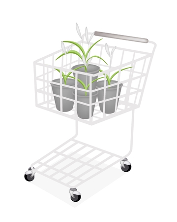A Shopping Cart Full with Beautiful Dracaena Plant or White Orchid in Four Flowerpots for Garden Decoration.  Vector
