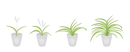 hedge trees: An Illustration Collection of Beautiful Dracaena Plant or White Orchid in Four Flowerpots for Garden Decoration.
