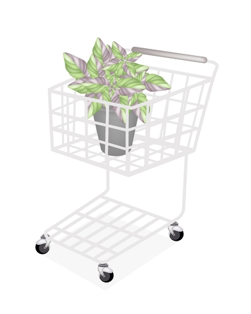 hedge trees: Ecological Concept, A Shopping Cart Full with Argyroneura Plant