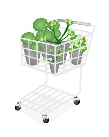 Ecological Concept, A Shopping Cart Full with Asiatic Pennywort   Vector