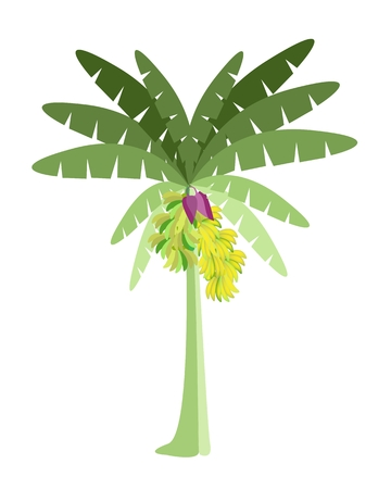 weegbree: Ecologische Concept, Een mooie Tropische bananenboom met Bananen en Banana Blossom