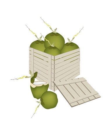 coconut fruit: Fresh Fruits, An Illustration of Beautiful Fresh Coconut Fruit in Wooden Crate or Cargo Box, Ready for Shipping or Delivery.