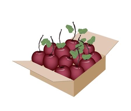 eden: Frische Fr�chte, eine Illustration der k�stlichen frischen Red Apple mit gr�nen Bl�ttern in einem Pappkarton, Versand kann sofort oder Lieferung.