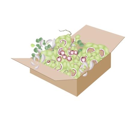 manila: Frutta fresca, un'illustrazione di verde fresco Baccelli di maturazione di Manila tamarindo o Pithecellobium Benth Dulce in una scatola di cartone, pronta per la spedizione o la consegna.