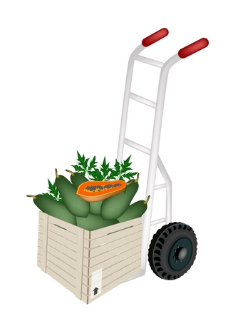 Hand Truck or Dolly Loading Wooden Crate or Cargo Box Full with Fresh Ripe Papayas, Ready for Shipping or Delivery.   Vector