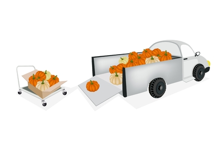 dolly: Hand Truck or Dolly Loading Fresh Raw Pumpkins into A Pickup, Ready for Shipping or Delivery.