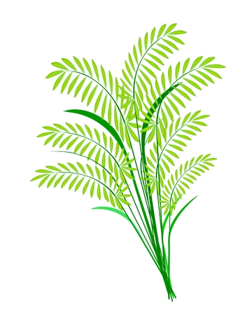 Environmental Concept, Vector Illustration of Beautiful Green Rice, Cereal Plants or Ferns Leaves Isolated on White Background  Vector