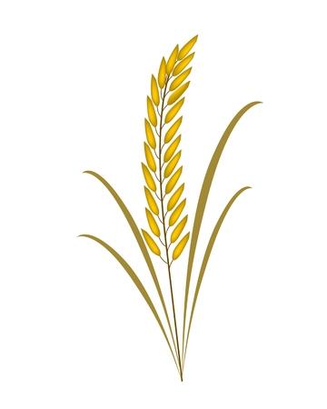 plante tropicale: Concept de l'environnement, Vector illustration de la belle r�colte de c�r�ales ou de riz m�r plantes avec des feuilles vertes sur fond blanc Illustration